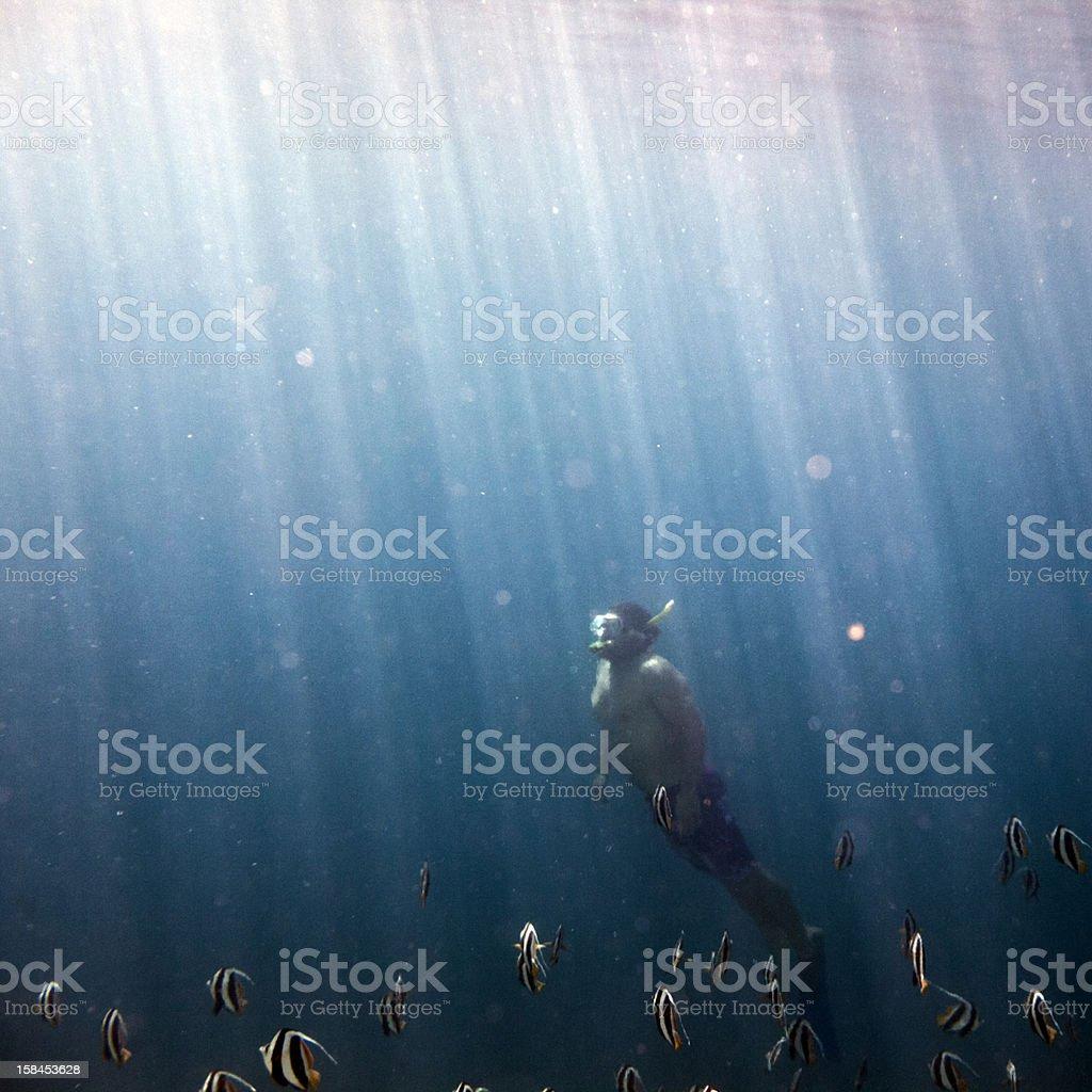 Snorkeling royalty-free stock photo
