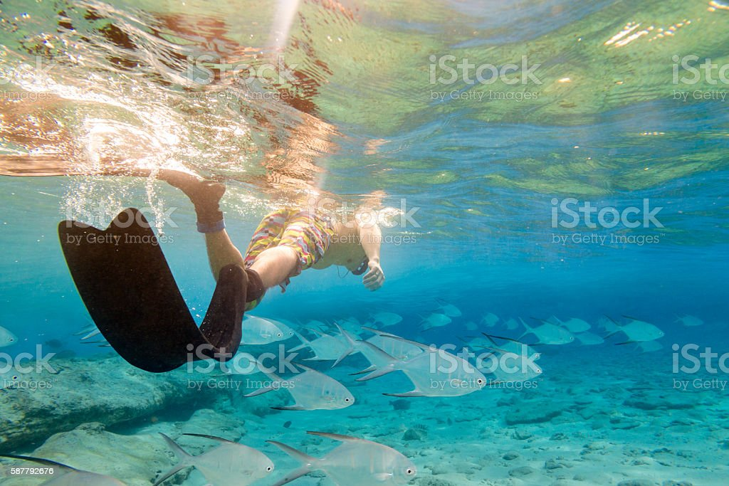 Snorkeling with fishes stock photo