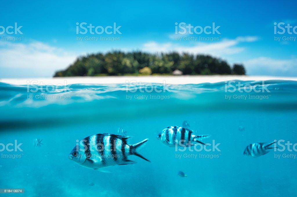 Snorkling On Zanzibar Island stock photo