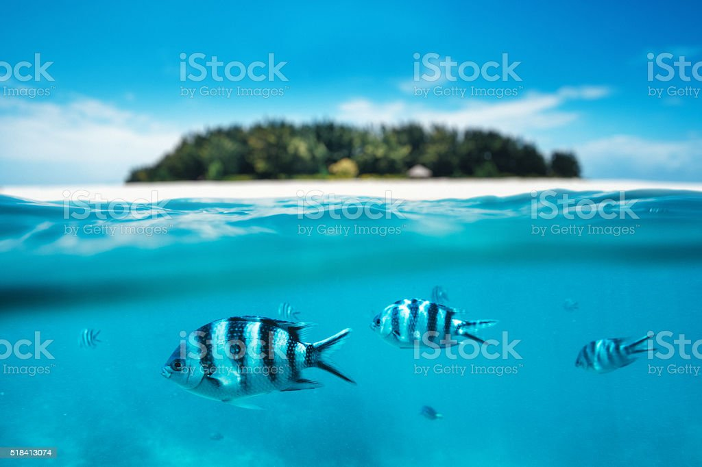 Snorkling On Zanzibar Island stock photo