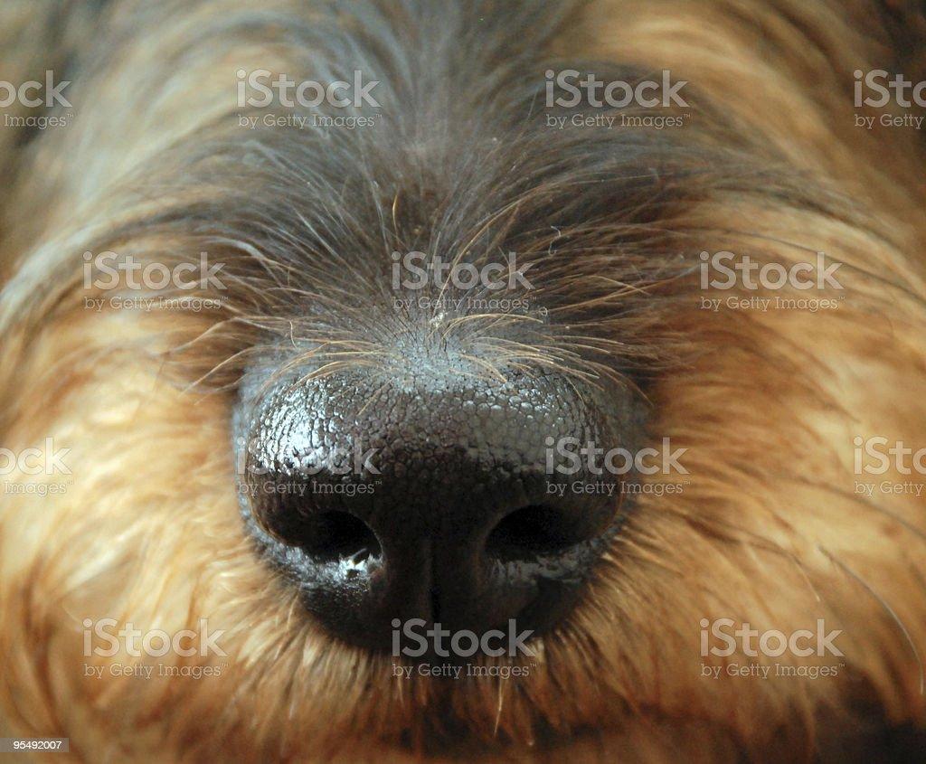 snout stock photo