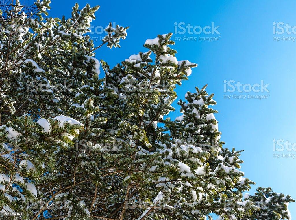 Śnieg drzewa powyżej zbiór zdjęć royalty-free