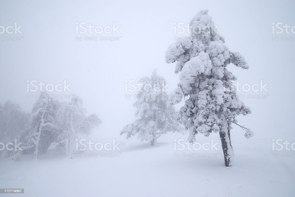 snow and fog royalty-free stock photo