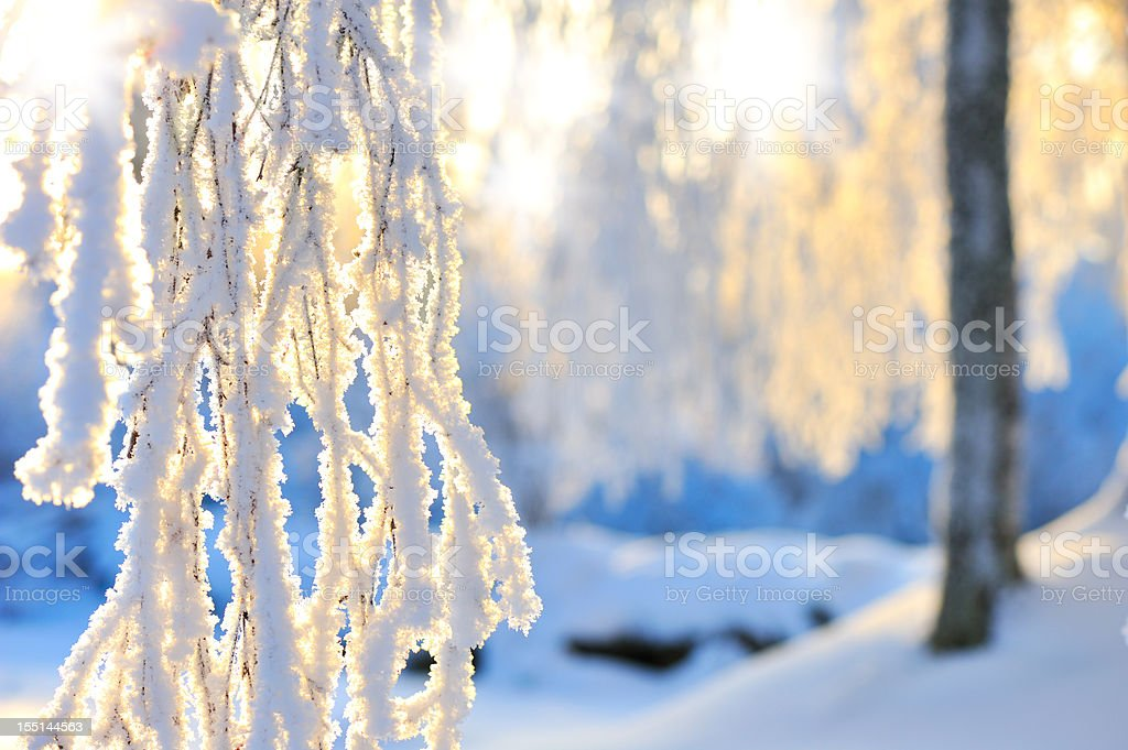 Snow and frost covered branches royalty-free stock photo
