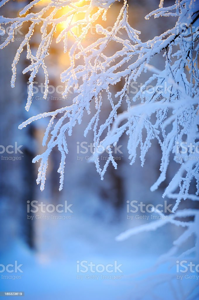 Snow and frost covered tree branches royalty-free stock photo