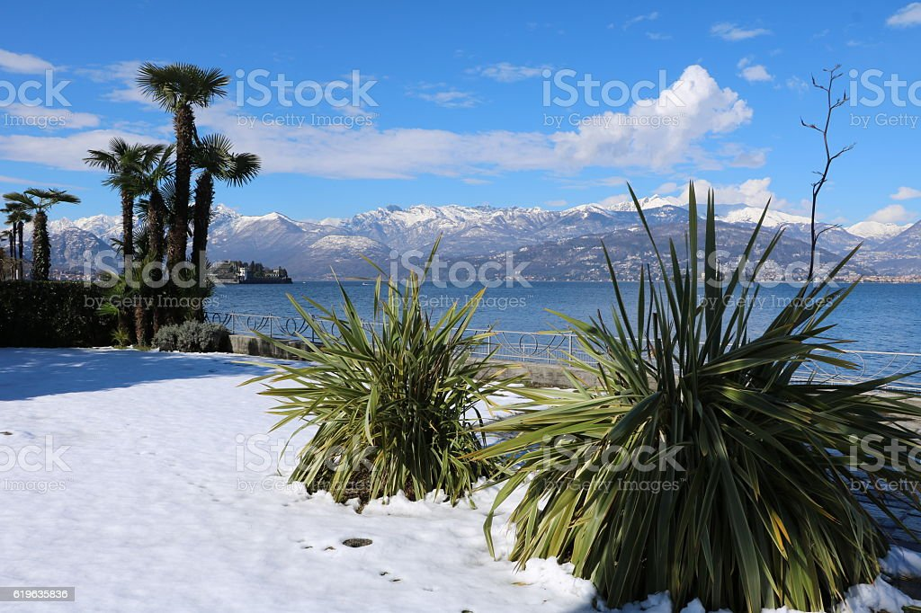 Snow and palms in Stresa at Lake Maggiore, winter Italy stock photo