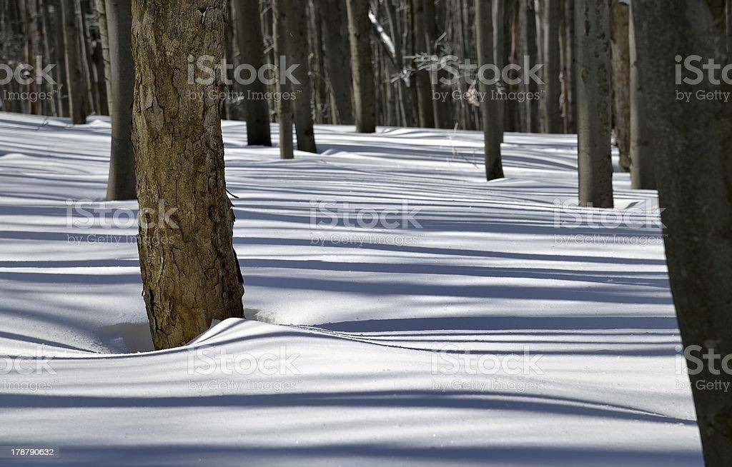 Nieve y las sombras en el bosque foto de stock libre de derechos