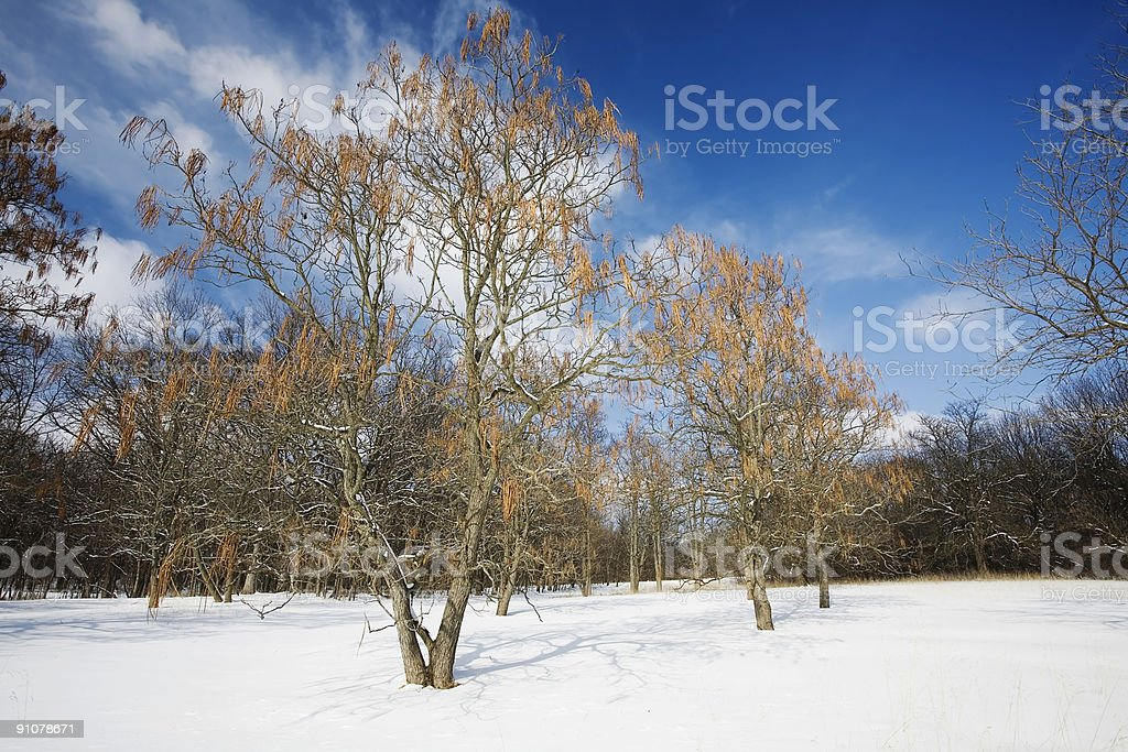 Snow and Trees in Illinois stock photo