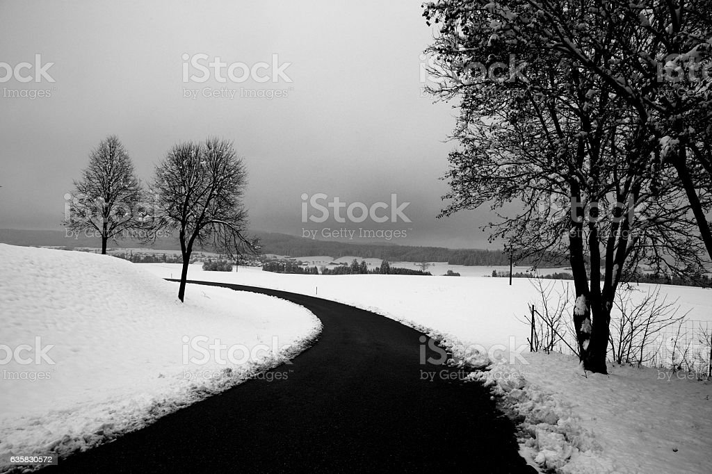Snow and trees stock photo