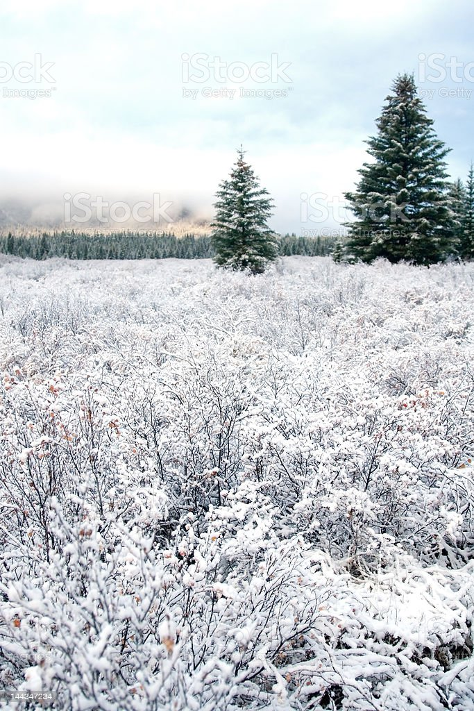 Snow and Winter Landcsape royalty-free stock photo