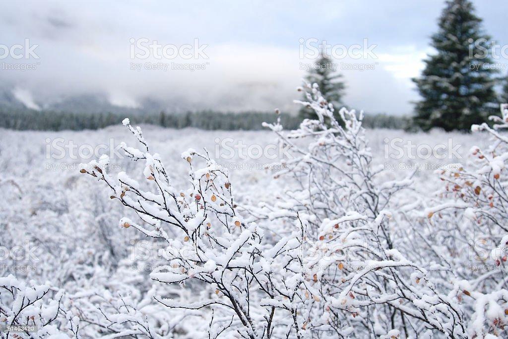 Snow and Winter Landcsape royalty-free stock photo