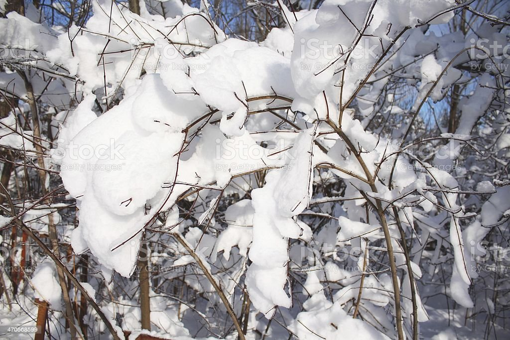 Snow as foam covered branches at the sun royalty-free stock photo