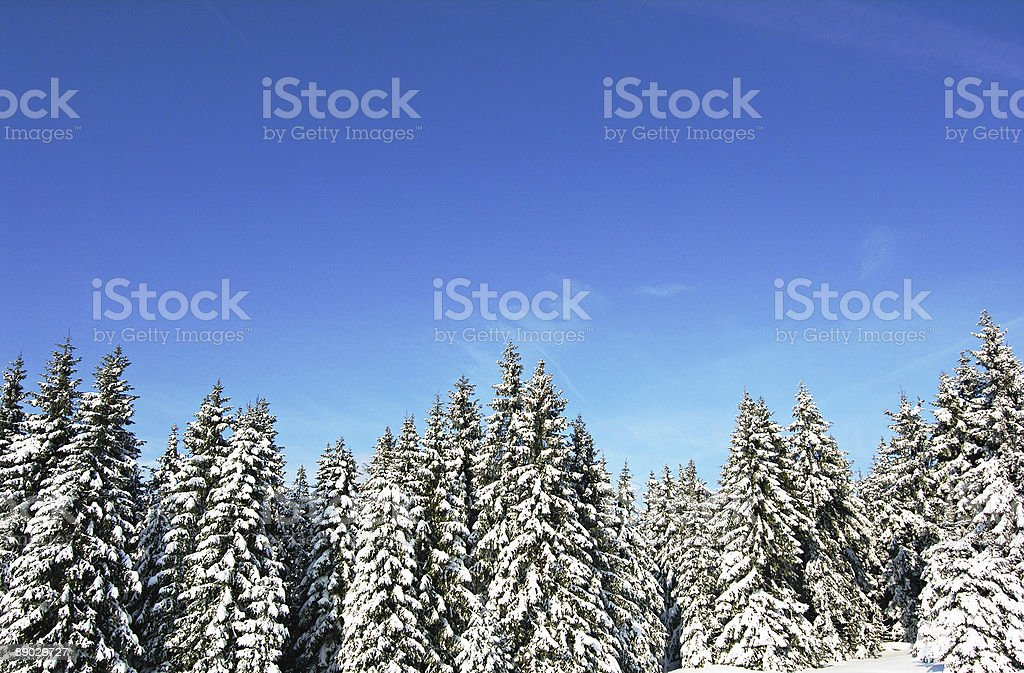 Snow Beauty royalty-free stock photo