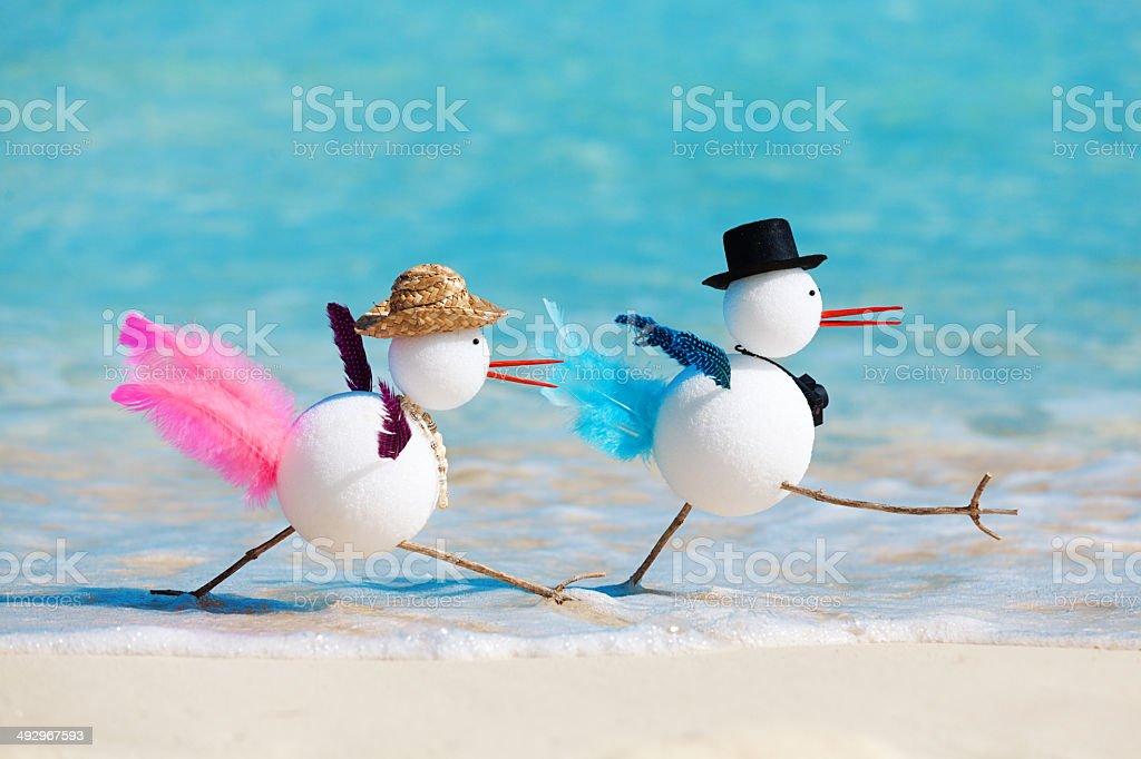 Snow Birds Winter Vacationing in Tropical Beach Paradise Horizontal stock photo