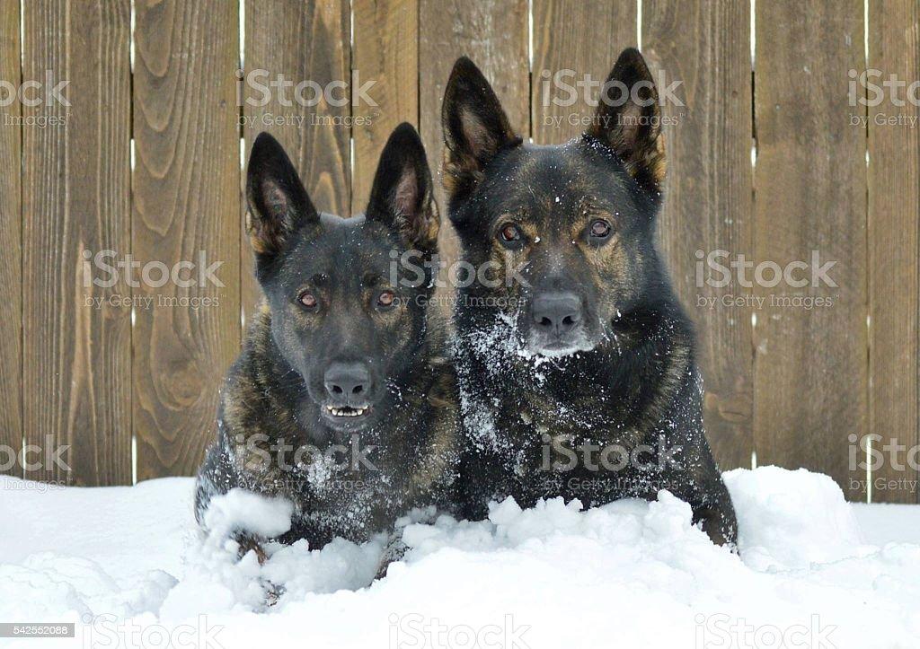 Snow bound stock photo