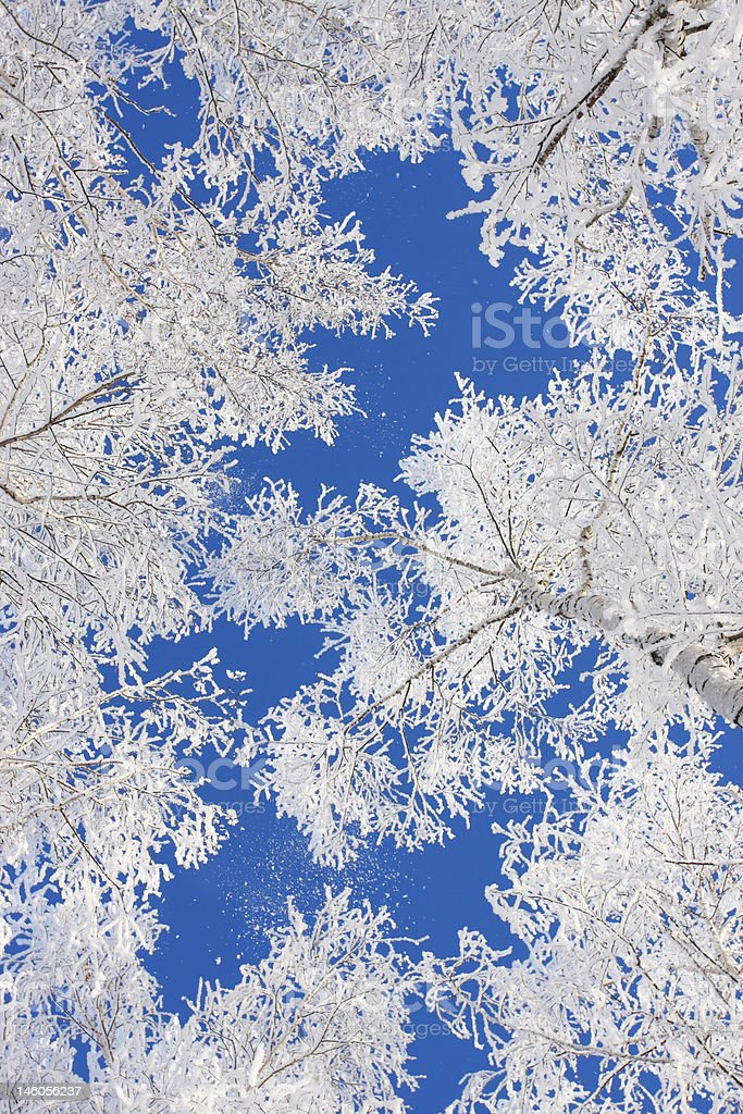Snow branch royalty-free stock photo