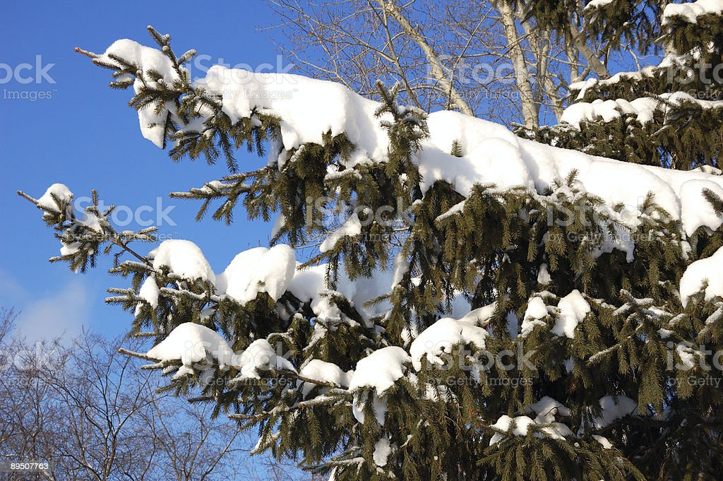 snow branches on background blue sky royalty-free stock photo