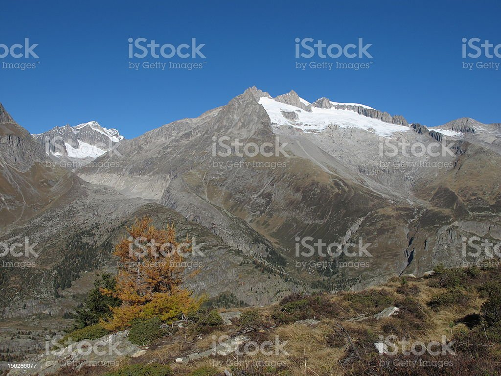 Snow Capped Mountains And Yellow Larch stock photo