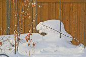 Snow Carved Beaver in our Backyard