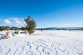 Snow clad landscape on golf course