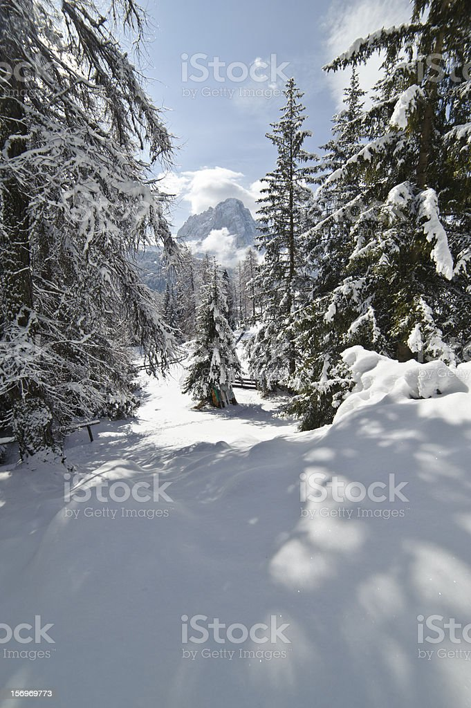 Snow Climbing through a forrest in the Dolomites stock photo