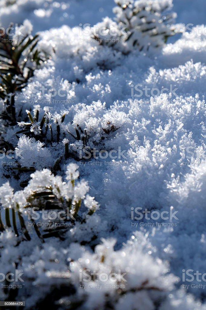snow close up3 stock photo