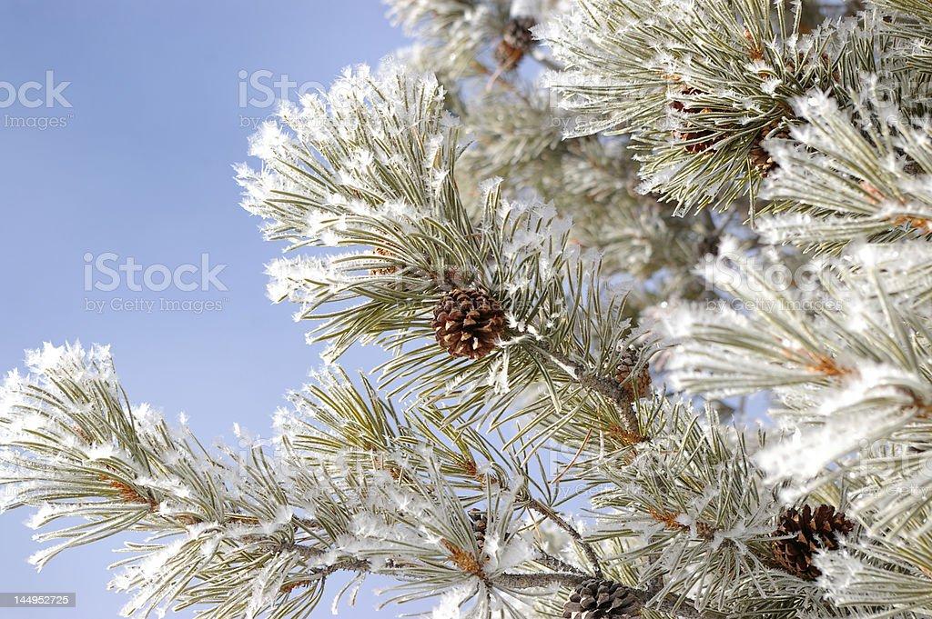 Snow Cone ロイヤリティフリーストックフォト