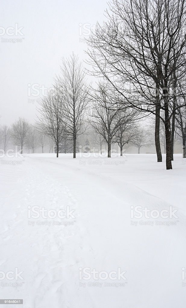 Snow covered alley in a winter park royalty-free stock photo