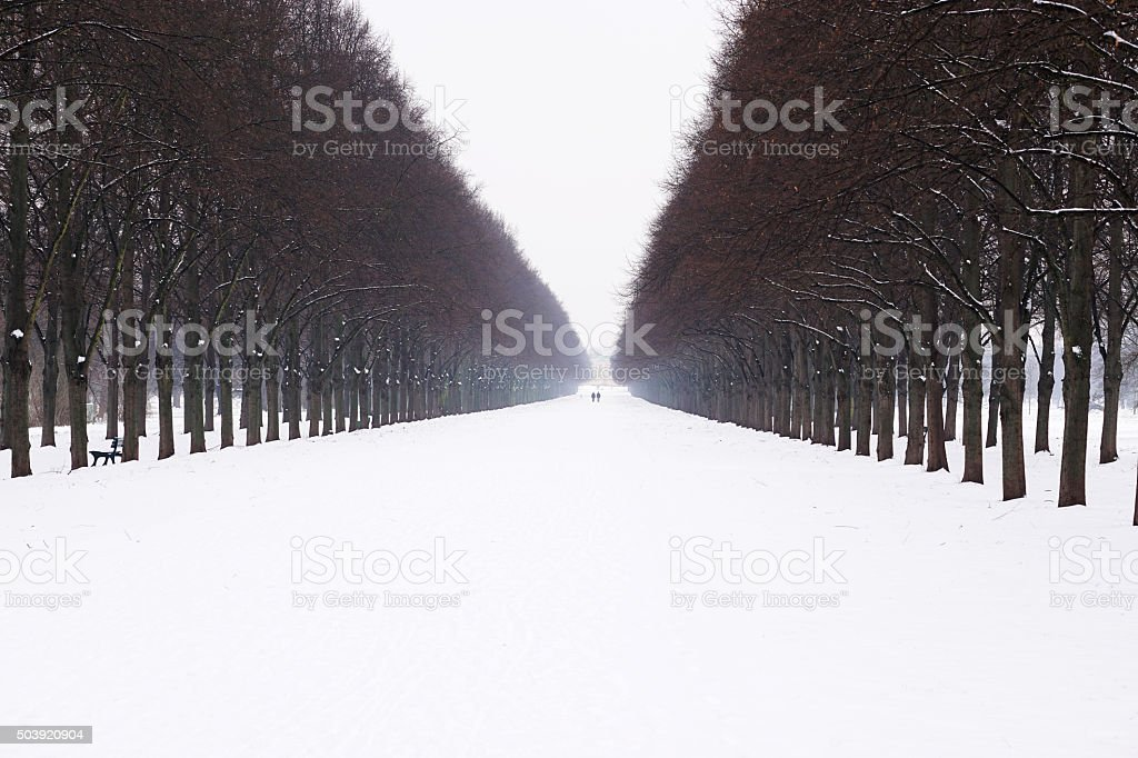 snow covered alley in winter stock photo
