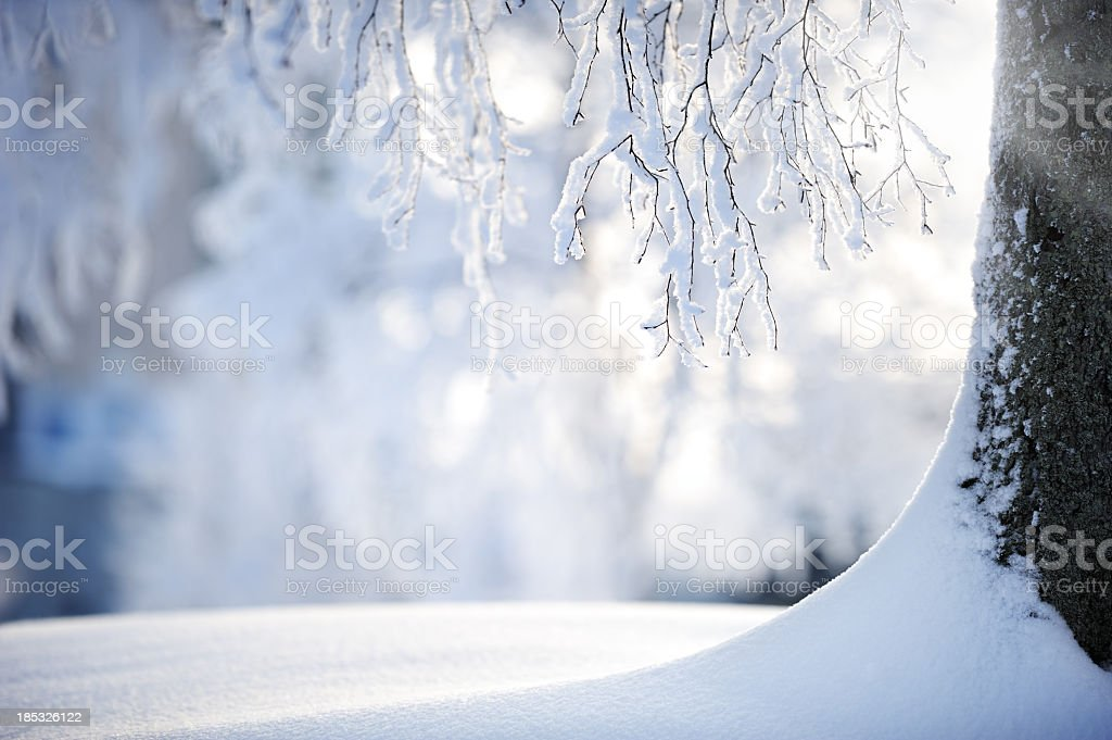 Snow covered branches on a birch tree stock photo