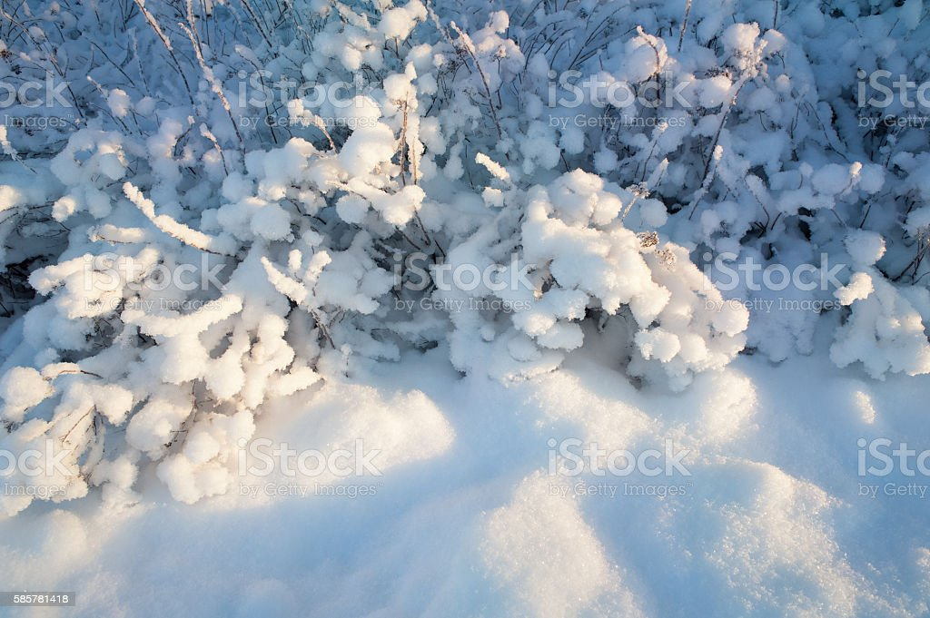 Snow covered bushes stock photo
