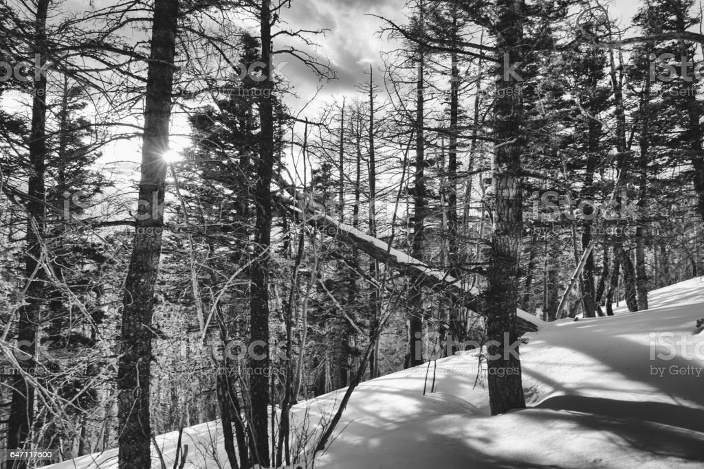 Snow covered forest in the Colorado Rocky Mountains in Winter stock photo