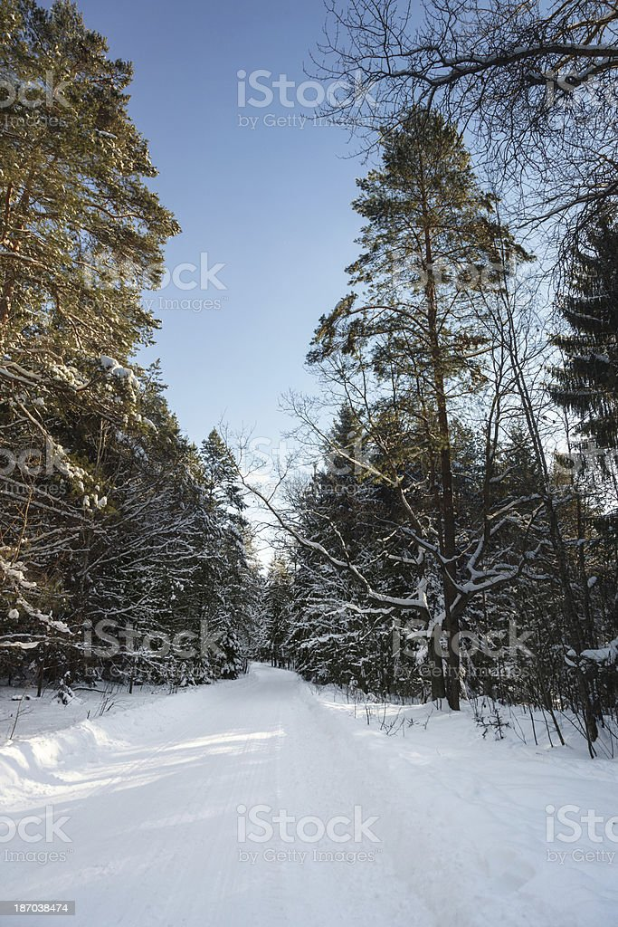 Snow covered forest path stock photo