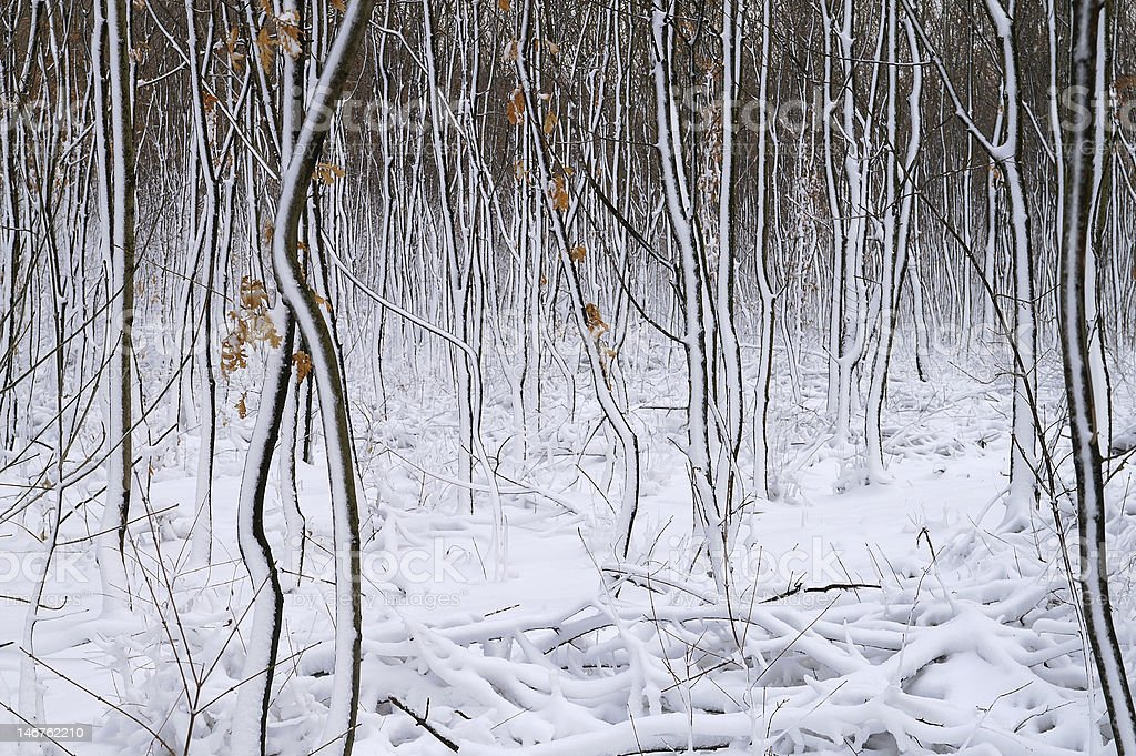 snow covered forest royalty-free stock photo