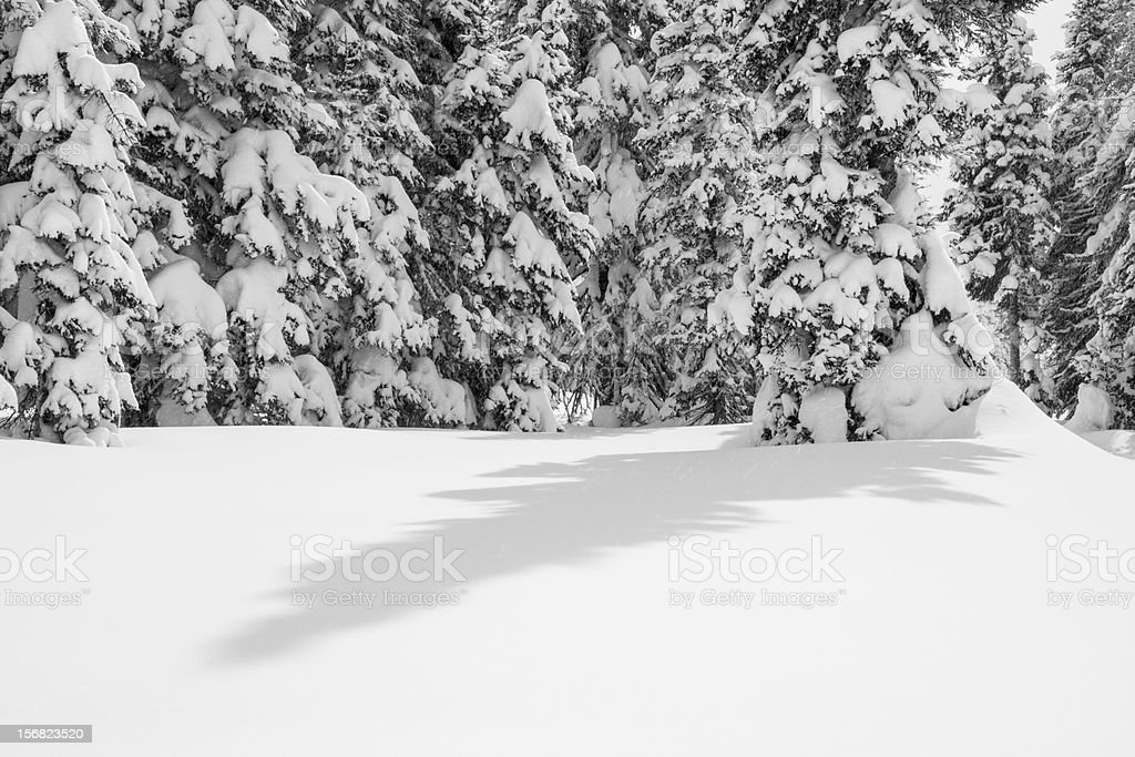 Snow Covered Forest with Shadow royalty-free stock photo