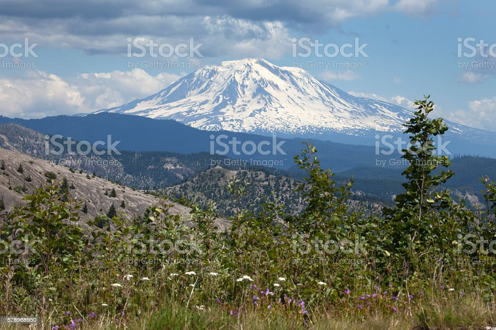 Snow covered Mount Adams Washington and wildflowers stock photo