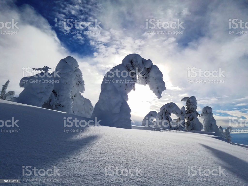 Snow Covered Mountain Trees in the High Alpine on a Sunny, Blue Day stock photo