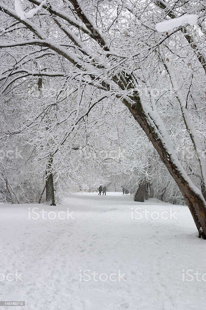 snow covered park royalty-free stock photo