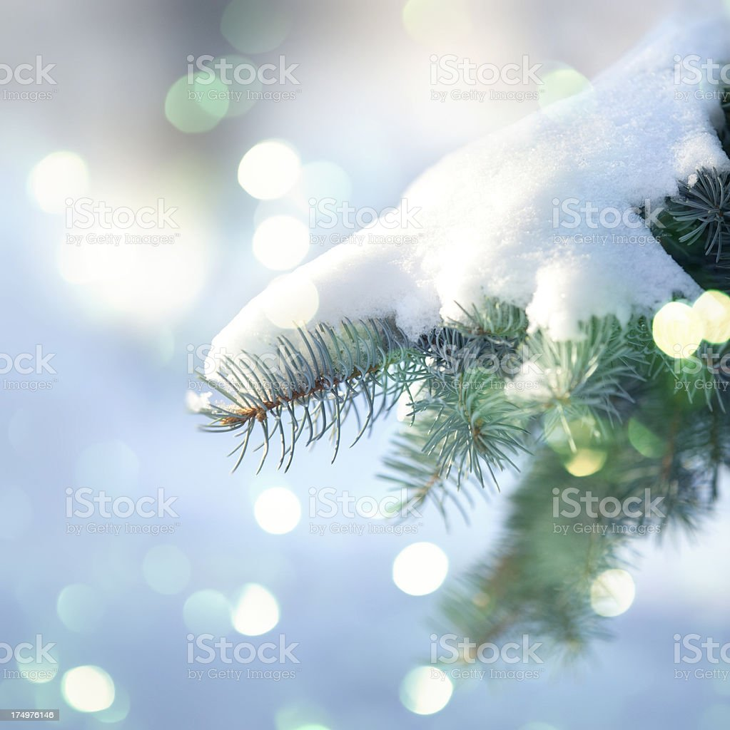 Snow Covered Pine Tree royalty-free stock photo