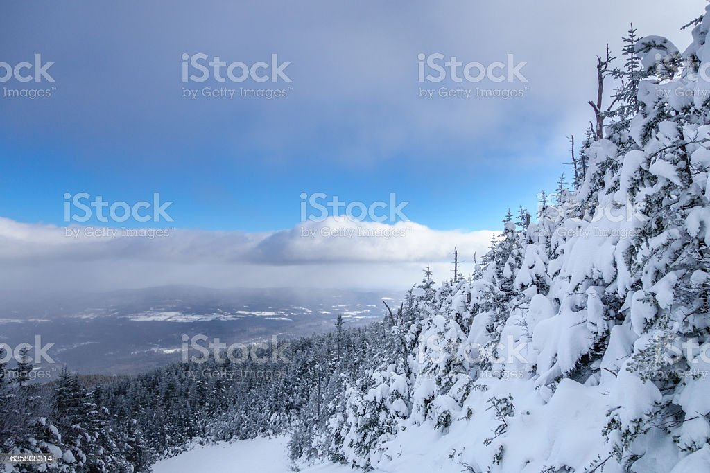 Snow covered pine trees on mountain stock photo