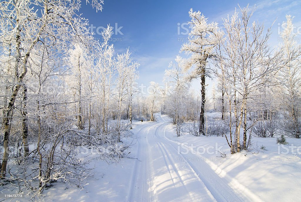 Snow covered road and trees with track marks on the road royalty-free stock photo