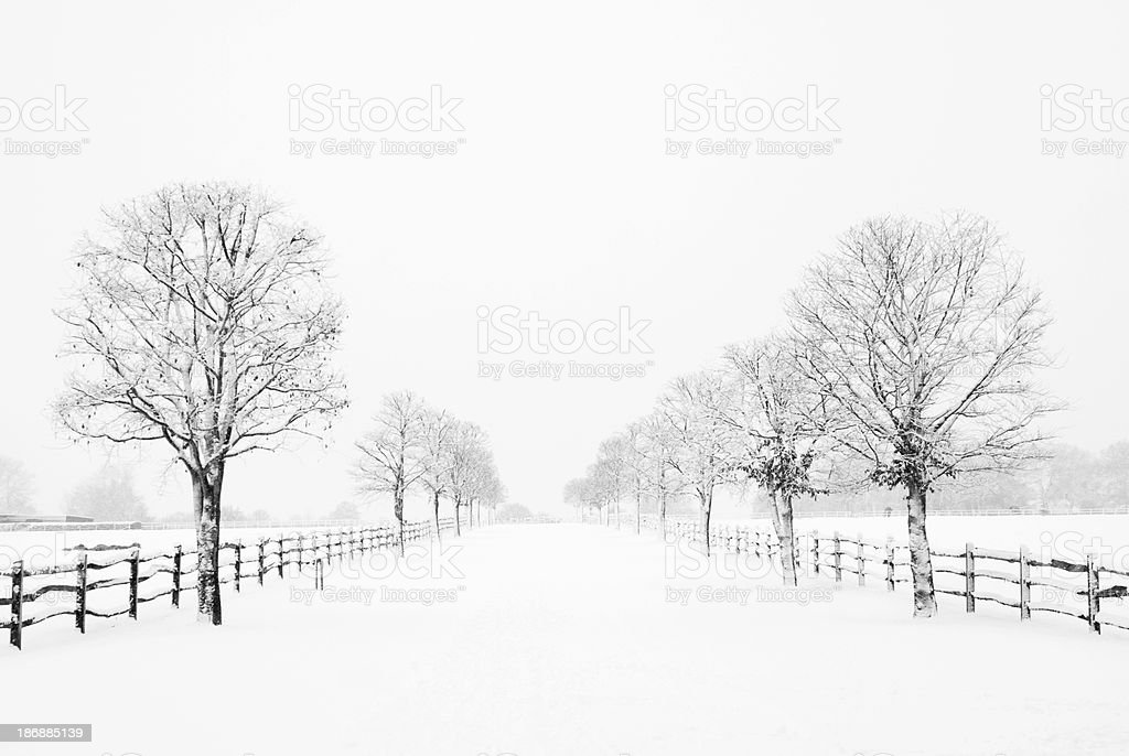 Snow covered road lined with trees and wooden fence royalty-free stock photo