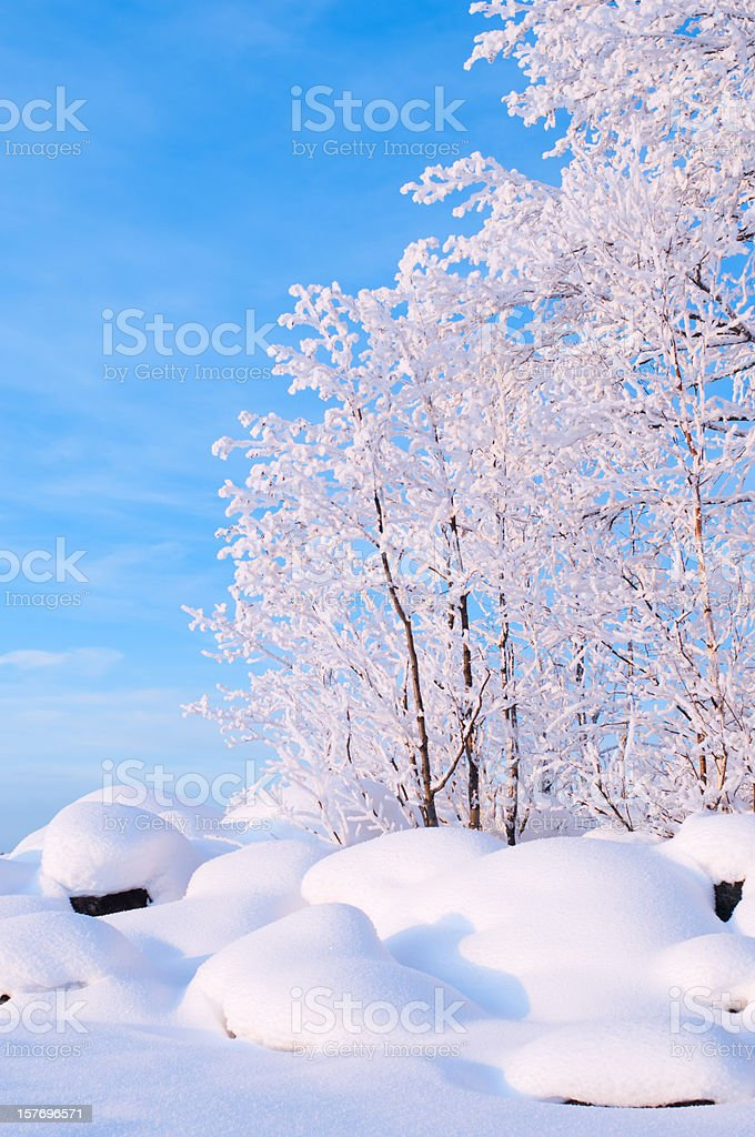 Snow covered stones and trees royalty-free stock photo