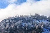 Snow Covered the trees near Kanas Lake, Xinjiang, China