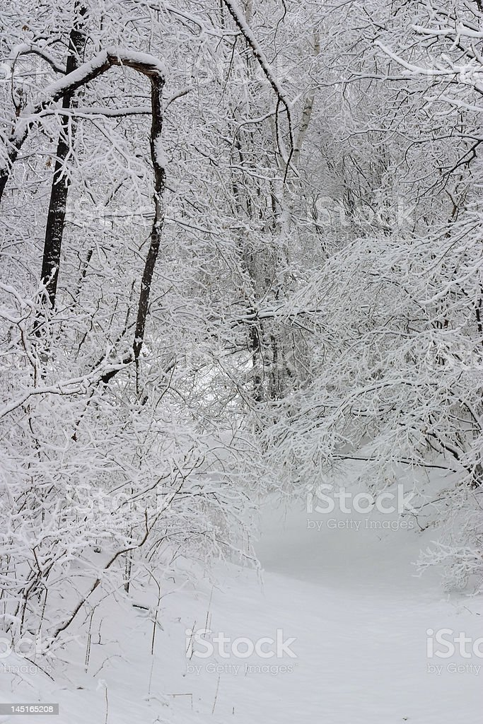 snow covered trail royalty-free stock photo