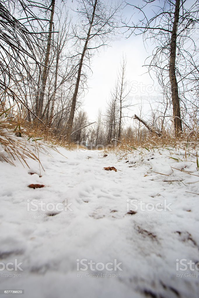 Snow Covered Trail. stock photo