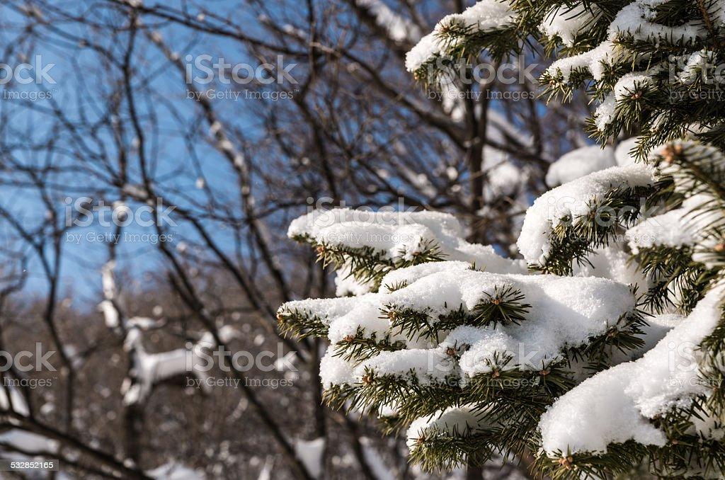 Śnieg drzewa pokryte zbiór zdjęć royalty-free
