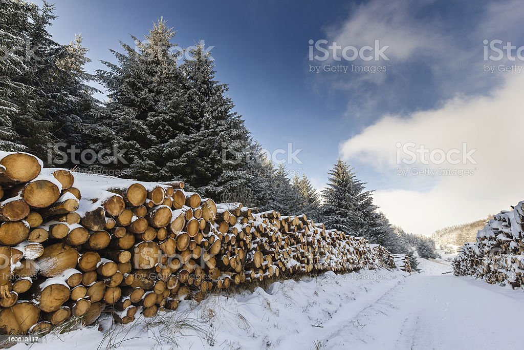 Snow covered trees and logs royalty-free stock photo