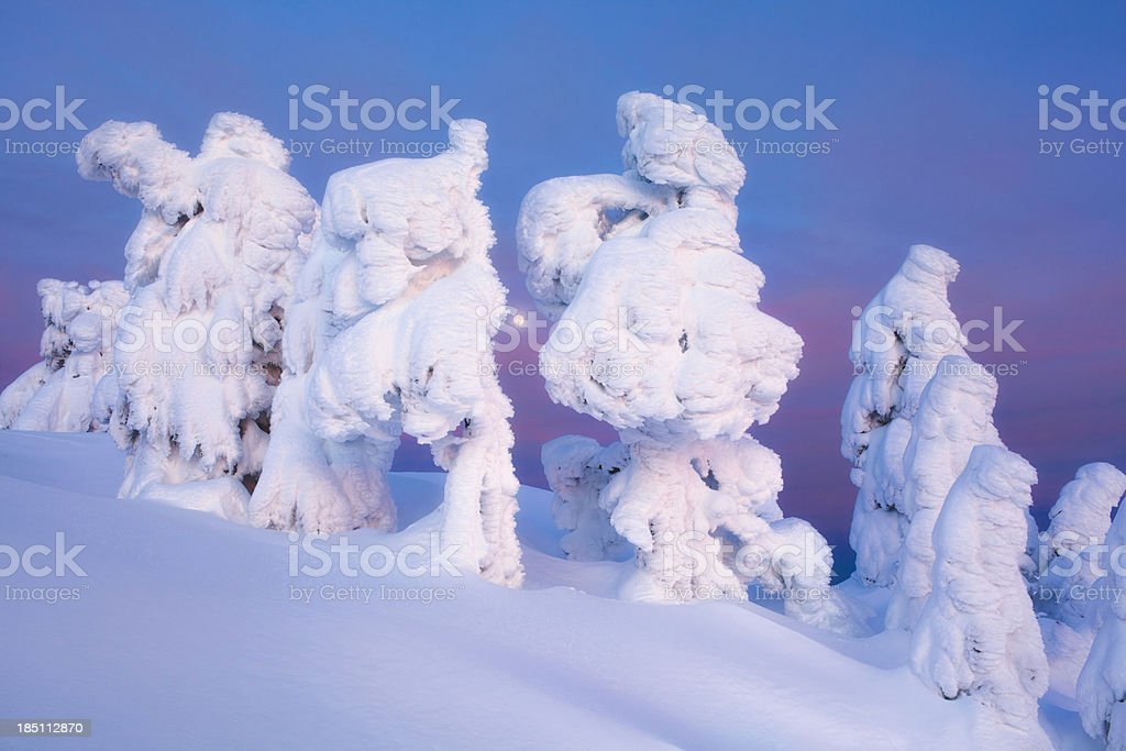 Snow covered Trees and Sunset stock photo