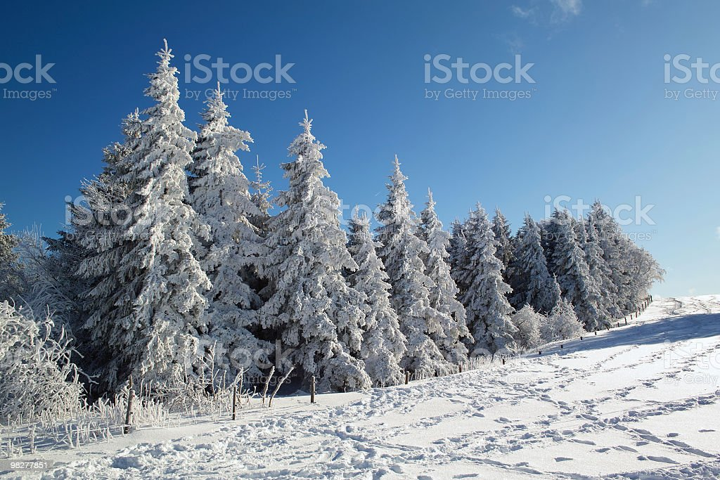 snow covered trees at Schauinsland royalty-free stock photo